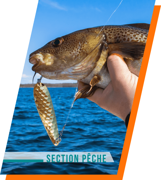 section peche
